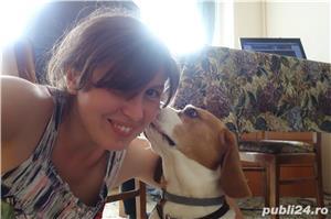 Cazare animale de companie, pet sitting, plimbat caini - imagine 15