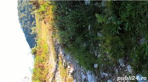 Vand teren la Coada Lacului Lesu - Valea Iadului - imagine 5