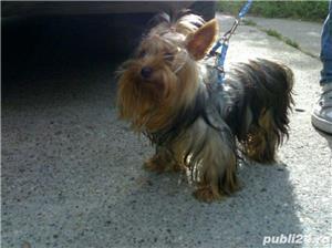 Yorkshire Terrier Talie Mini Toy  - imagine 9