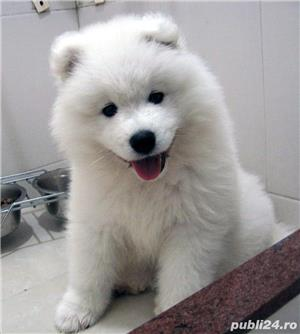 Vand samoyed!! - imagine 2