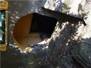 Vand casa la tara in comuna Giurgita - imagine 9