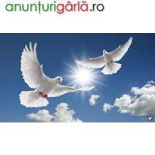 * VAND si INCHIRIEZ porumbei albi pentru NUNTI in sibiu - imagine 3
