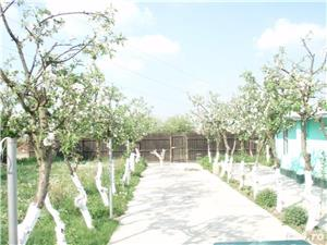 Lot teren INTRAVILAN in fosta livada meri chiar langa padure Pantelimon- Manastirea Cernica - imagine 5