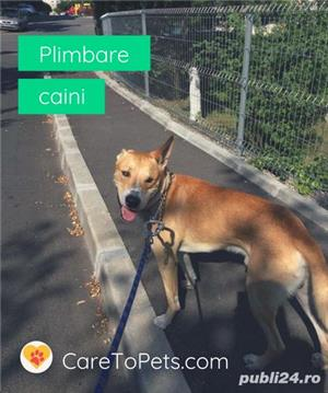 Plimbare caini - Dog Walker de incredere si verificati - imagine 2