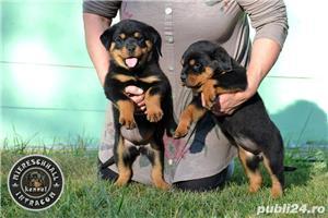 Rottweiler pui cu pedigree de vanzare  - imagine 1