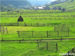 Oportunitate. Pret de urgenta. Deosebit teren in Suceava, Bucovina. - imagine 3