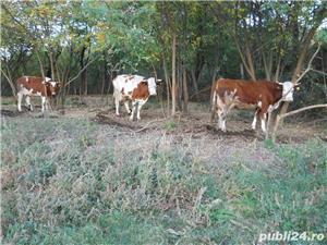 Vand vaci si vitei - imagine 1