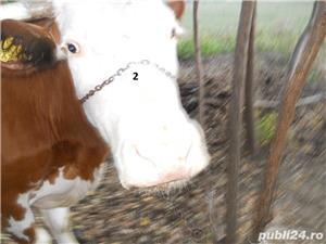 Vand vaci si vitei - imagine 5