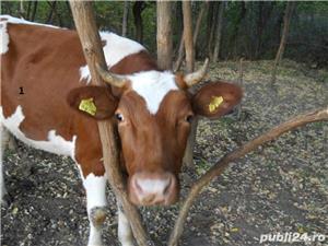 Vand vaci si vitei - imagine 10