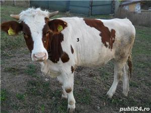 Vand vaci si vitei - imagine 6