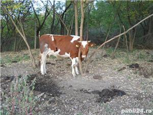Vand vaci si vitei - imagine 9