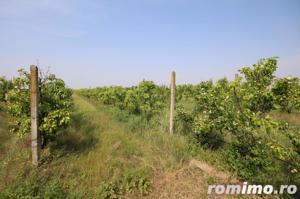 Teren 346,000 mp zona Arad , livada si teren agricol - imagine 3