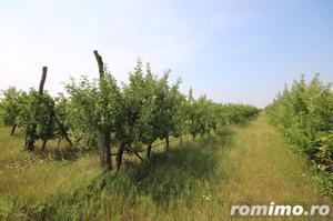 Teren 346,000 mp zona Arad , livada si teren agricol - imagine 7