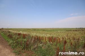 Teren 346,000 mp zona Arad , livada si teren agricol - imagine 9