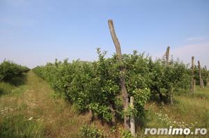 Teren 346,000 mp zona Arad , livada si teren agricol - imagine 6