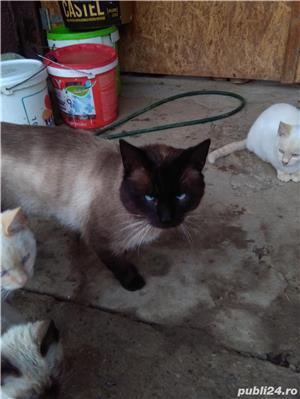 vand urgent pisicuta mica  - imagine 2