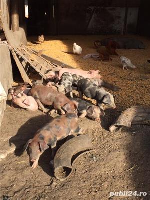 Vand pasari si animale crescute la ferma - zona Mizil, Prahova - imagine 4