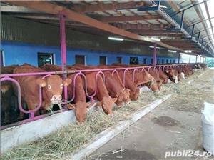 Vaci Limousine - imagine 1