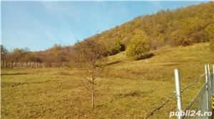 Tautii Magheraus teren intravilan 5000 mp (50 ari) si cladire (casa) veche (79 mp) - imagine 2