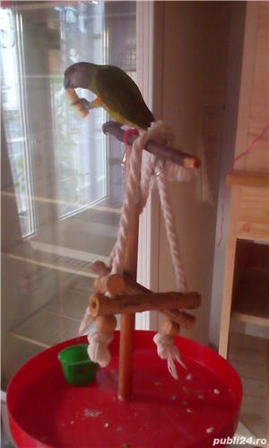 Pierdut papagal - imagine 1