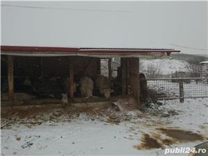 ferma de vaci - imagine 15