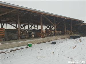 ferma de vaci - imagine 14