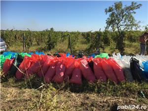 Vanzare afacere viticola: podgorie jud Buzau, Dealul Viei - imagine 15