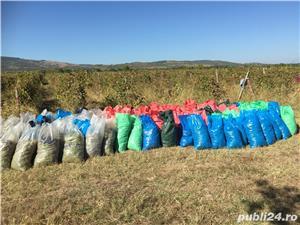Vanzare afacere viticola: podgorie jud Buzau, Dealul Viei - imagine 12