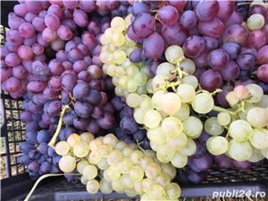 Vanzare afacere viticola: podgorie jud Buzau, Dealul Viei - imagine 10