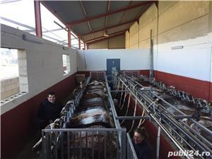 Standurii pentru muls capre,oii  - imagine 2