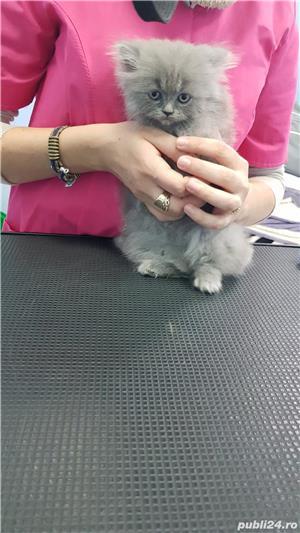 Salon Coafor Canin si felin Passion For Pets Timisoara - imagine 8