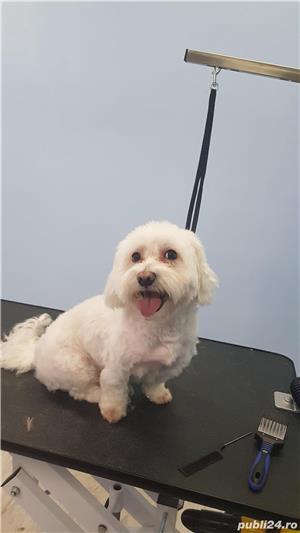 Salon Coafor Canin si felin Passion For Pets Timisoara - imagine 6