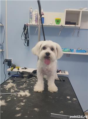 Salon Coafor Canin si felin Passion For Pets Timisoara - imagine 2