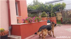 Vand Casa cu teren Bucuresti, zona Drumul Taberei, Bd Timisoara - Str Nicodim, sector 6 - imagine 39
