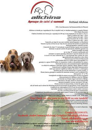 Pensiune câini București  - imagine 1