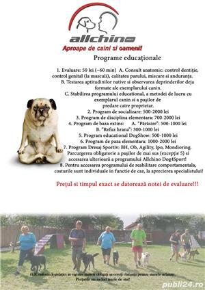 Pensiune câini București  - imagine 3
