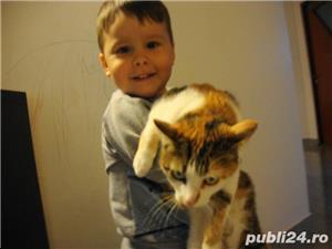 Donez motan si pisica de rasa - imagine 6
