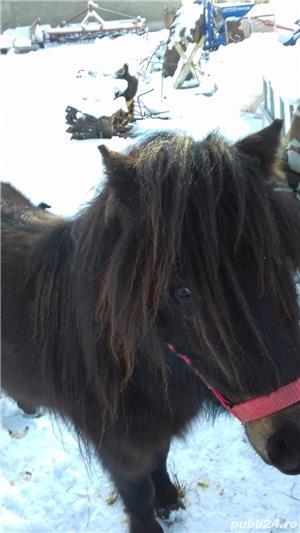 Vând ponei - imagine 2