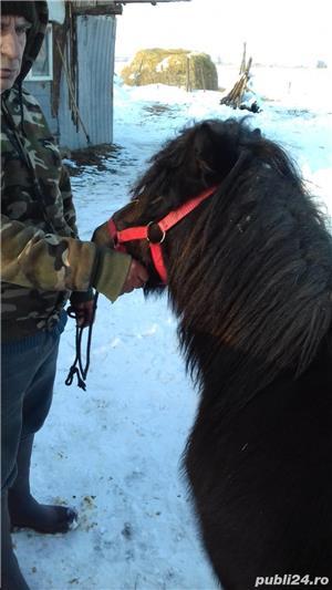 Vând ponei - imagine 4