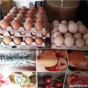 oua de gaina pentru consum - imagine 3