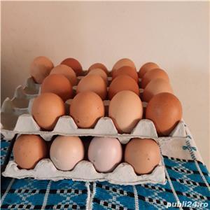 oua de gaina pentru consum - imagine 2