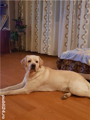 Labrador montă - imagine 2