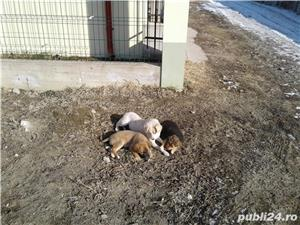 Ofer catei spre adoptie!!! - imagine 1