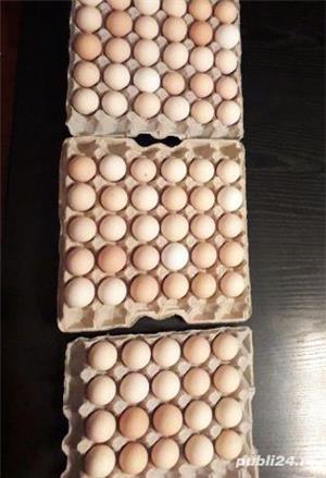 Australorp oua pentru incubat - imagine 2