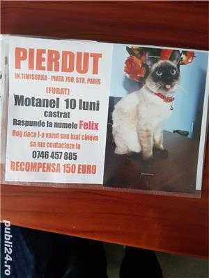PIERDUT - imagine 2