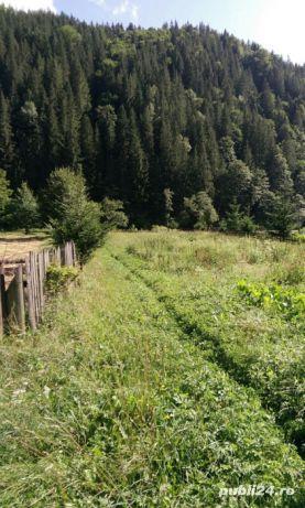 teren intravilan 25 km de Vatra Dornei - imagine 7