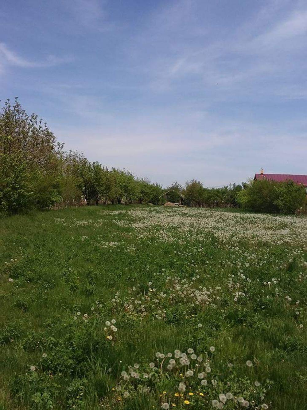 Teren Comuna Gruiu, sat Santu-Floresti - imagine 2