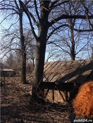 casa batraneasca cu teren - imagine 7