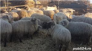 Vand oi cu miei si capre cu iezi - imagine 5