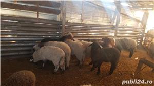 Vand oi cu miei si capre cu iezi - imagine 6